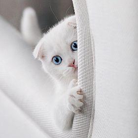 Www cat69 com