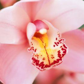 "Pink 2.75/"" satin petal cluster flower w// rhinestone center pointed"