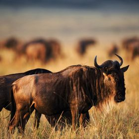 Kambaku Safari Lodge I Private Safari Resort in Namibia
