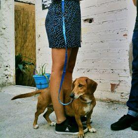 Cartoon Dog /& Bone Plantillas Para Grabado En Vidrio Artesanía Hobby actualidad Perros