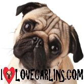 ILoveCarlins.com