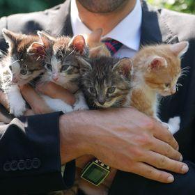 4k Cats