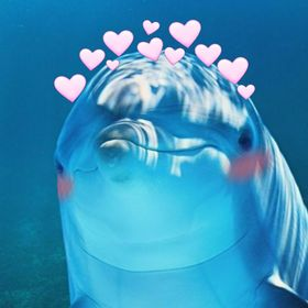 Dolphin Chan