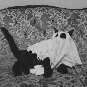 katt 🐱