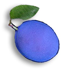 Blue Plum Software