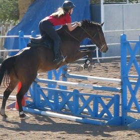 Winter Rose Equestrian  (602) 377-3752