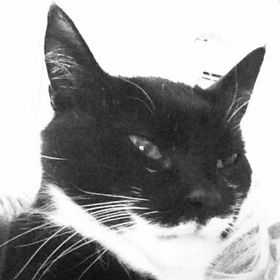 Katten Mia