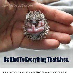 Kindness ❤️...:)