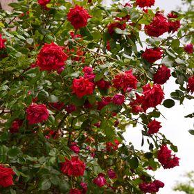 Flor na Noruega