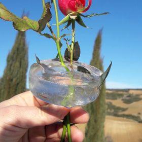 raflesia flor