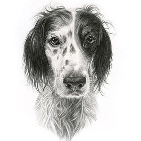 Pet Portraits By Melanie & Nicholas