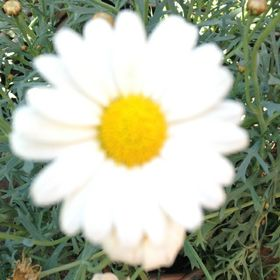 fleur ponsen