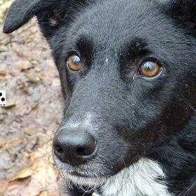 dreipunktecharlie.de - Hundeblog zu PRA und rund um das Leben mit Hund