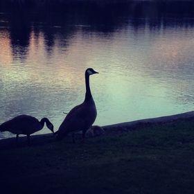 Wild Goose Guidance