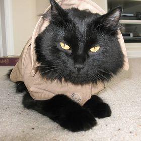 Cat Det. Buckley