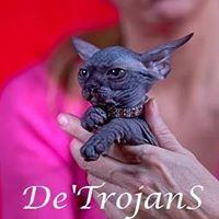 DeTrojanS Sphynx Bambino Elf