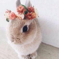 Rabbit Addicts