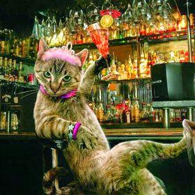 Catlady Killmouskie