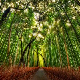 Bamboo Organics and Naturals