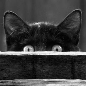 Les Chats Errants
