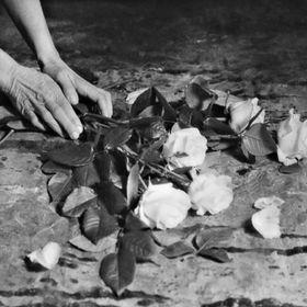 fioreria donaflor