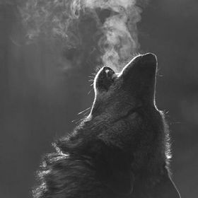 Gabi Wolf