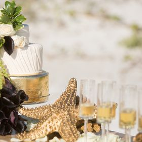 Brandi Image Photography - Weddings and Underwater Portraits
