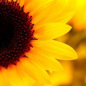 Sunflower H andmade Creations
