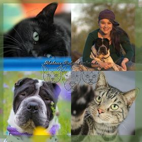 Malous Rabaukenbande - Blog für Hunde & Katzen in Beruf & Freizeit