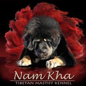 Nam Kha Kennel