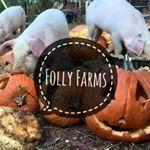 Folly Farms NC | Homesteading and Backyard Farming Blog