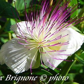 Alex Brignone