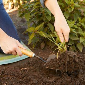 Inspiring Gardening