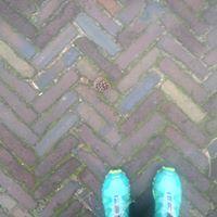 Marjolijn Dijksterhuis
