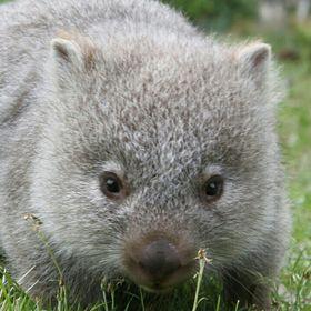 Nellie Wombat