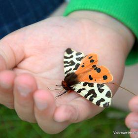 Ireland's Wildlife