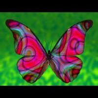 kelebek kelebek