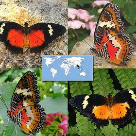 Butterflife Butterflife