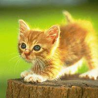 Katten Katten