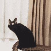 Antagonist Cat