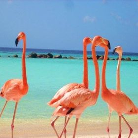Aruba Dream Home Vacations - Golden Reef Hospitality