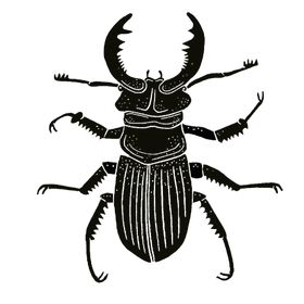 Beetle Back Designs