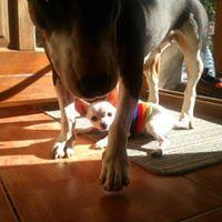 BolDog kutya fizioterápia