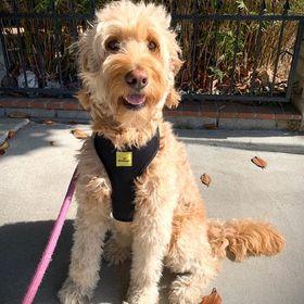 Dog Harness USA