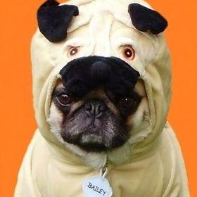 Bailey Puggins The Pug