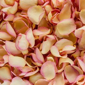 Petals and Roses Ltd