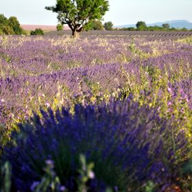foodieinProvence
