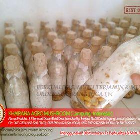UD.Khairana Agro Mushroom