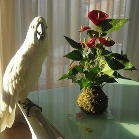 dekor-kytka