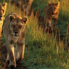 African Jacana Safaris